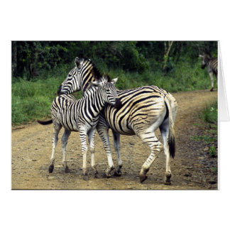 zebra and Baby Card