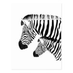 Zebra and baby post cards
