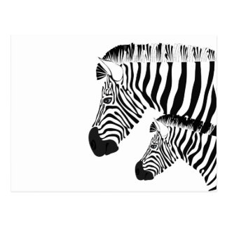 Zebra and baby postcard