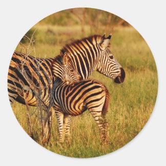 Zebra and foal - safari animals round sticker
