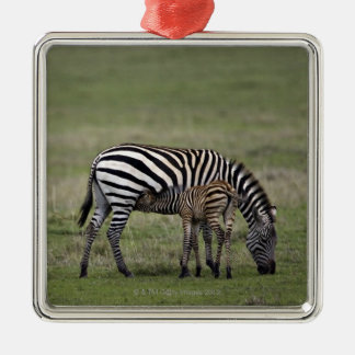 Zebra and nursing foal, Tanzania Christmas Ornament