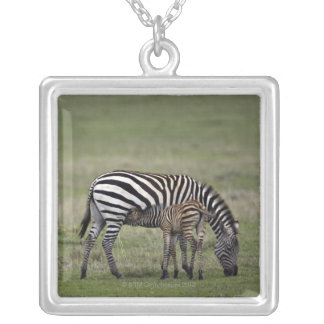 Zebra and nursing foal, Tanzania Silver Plated Necklace