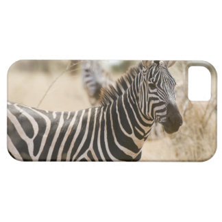 Zebra at the Meru National Park, Kenya. Case For The iPhone 5