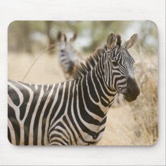 Zebra at the Meru National Park, Kenya. Mouse Mat