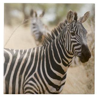 Zebra at the Meru National Park, Kenya. Tile