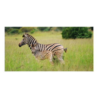 Zebra baby and mom photo greeting card