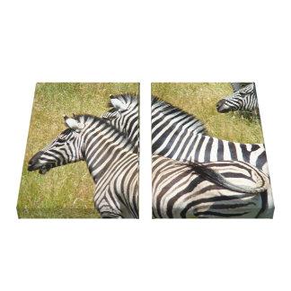 Zebra canvas art prints Wildlife Safari Gallery Wrapped Canvas