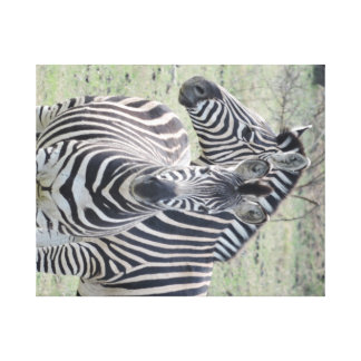 Zebra Stretched Canvas Print