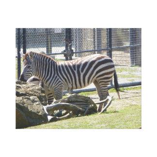 Zebra Canvas Prints
