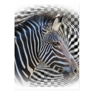 ZEBRA CHECKERBOARD HYPNOTIC POSTCARDS