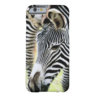 Zebra, close-up, selective focus barely there iPhone 6 case