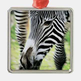 Zebra, close-up, selective focus christmas ornament