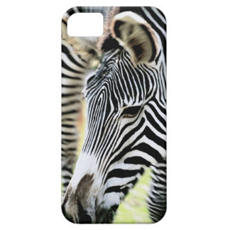 Zebra, close-up, selective focus iPhone 5 cases
