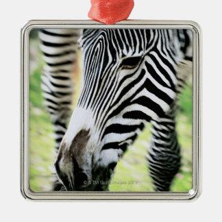 Zebra, close-up, selective focus Silver-Colored square decoration