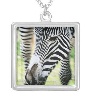 Zebra, close-up, selective focus silver plated necklace