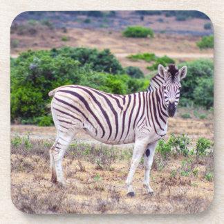 Zebra Coaster
