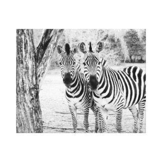 Zebra Duo Photograph Canvas Canvas Prints