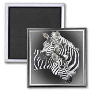 Zebra Entwined Gifts Square Magnet