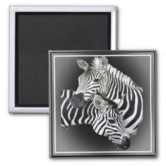 Zebra Entwined Gifts Refrigerator Magnet