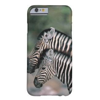 Zebra (Equus burchelli), Etosha National Park, Barely There iPhone 6 Case