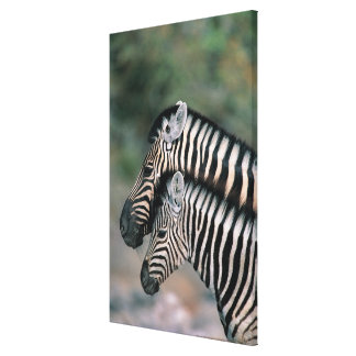 Zebra (Equus burchelli), Etosha National Park, Canvas Print