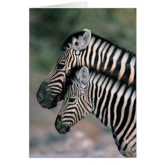 Zebra (Equus burchelli), Etosha National Park, Greeting Card