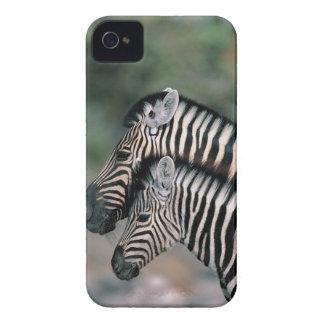 Zebra (Equus burchelli), Etosha National Park, iPhone 4 Cover