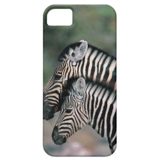 Zebra (Equus burchelli), Etosha National Park, iPhone 5 Cover