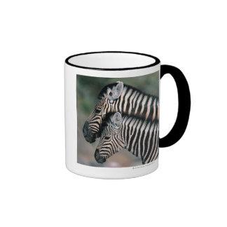 Zebra (Equus burchelli), Etosha National Park, Coffee Mugs