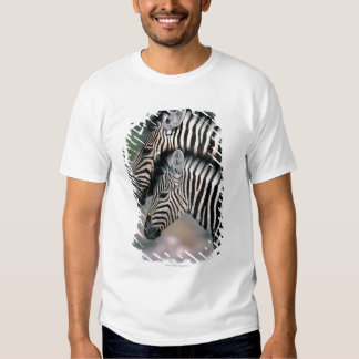 Zebra (Equus burchelli), Etosha National Park, Shirt