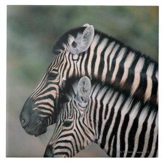 Zebra (Equus burchelli), Etosha National Park, Tile