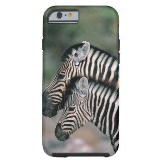 Zebra (Equus burchelli), Etosha National Park, Tough iPhone 6 Case