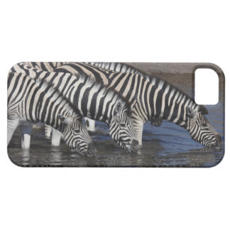 Zebra (equus quagga) drinking at a waterhole in iPhone 5 cover