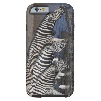 Zebra (equus quagga) drinking at a waterhole in tough iPhone 6 case