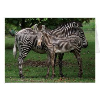 Zebra Family Card