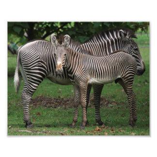 Zebra Family Photograph