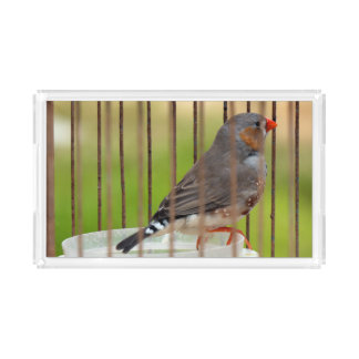 Zebra Finch Bird in Cage