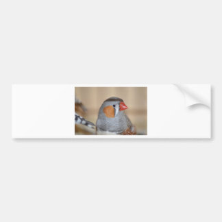 Zebra Finch Bumper Sticker