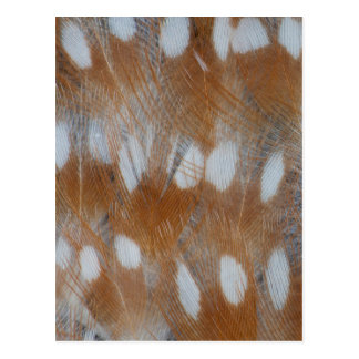 Zebra Finch Feathers Abstract Postcard