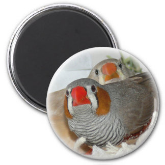 Zebra Finch Pair Magnet