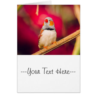 Zebra Finch Pink Background Card