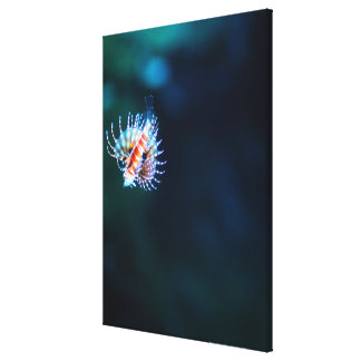 Zebra firefish canvas print