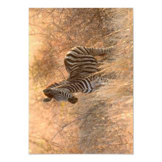 Zebra foal in morning light magnetic invitations