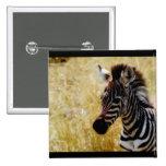 Zebra Foal wildlife baby 15 Cm Square Badge