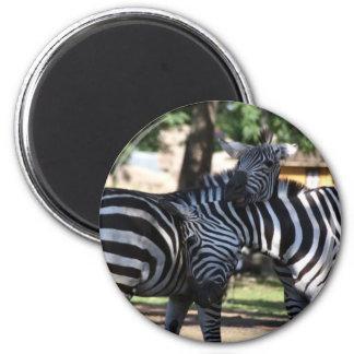 Zebra Friends Magnet