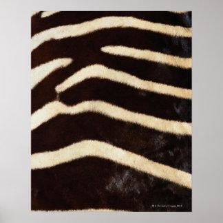 Zebra Hide Poster