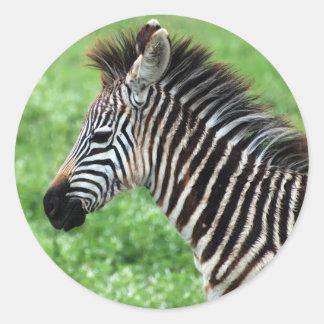 zebra horse round sticker
