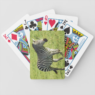 Zebra in Serengeti Ngorongoro Crater Playing Cards