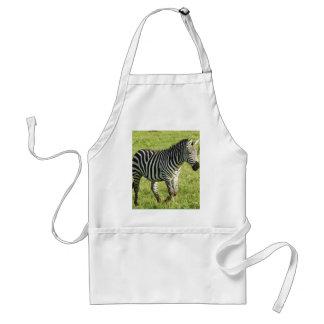 zebra in Serengeti.,Ngorongoro Crater Standard Apron