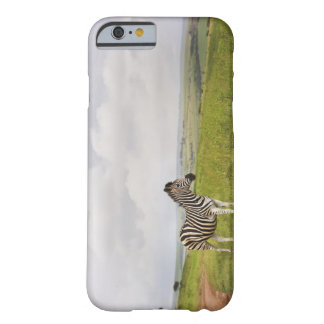 Zebra in the countryside, South Africa Barely There iPhone 6 Case